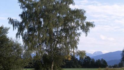 Au Kohlbach