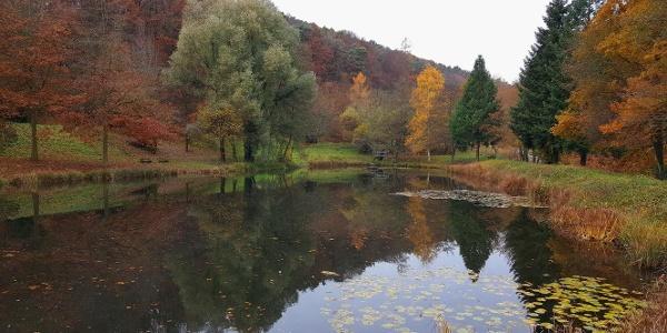 Am kleinen Stausee beginnt die schöne Tour, die Ihnen den Charakter des Pfälzer Walds zeigt