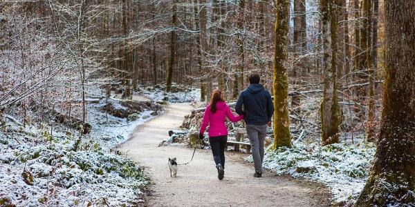 Winterwandern im Zauberwald