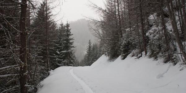Auf Forststraße Aufstieg durch den Wald