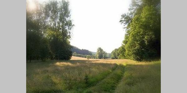Die Wiesen vom Gennenbachtal.