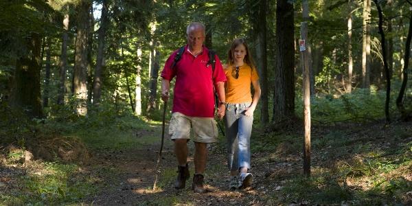 Im Wald bei Wanderath
