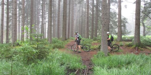 Waldstück bei Raeren