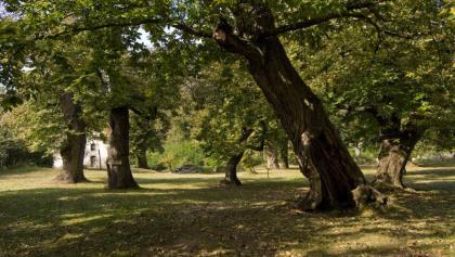 Der Bosco (Wald) Caproni