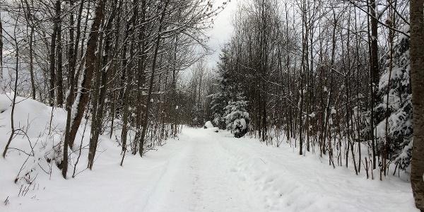 Winterspaziergang an der Ill