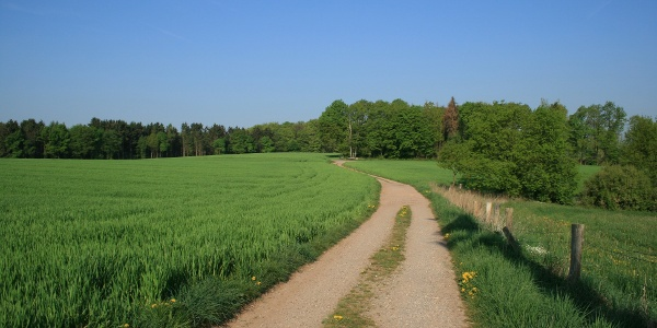 Pilgerweg bei Hasbergen