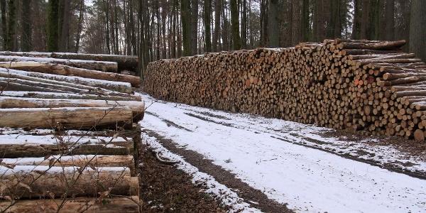 Holz ist wertvolle Energie