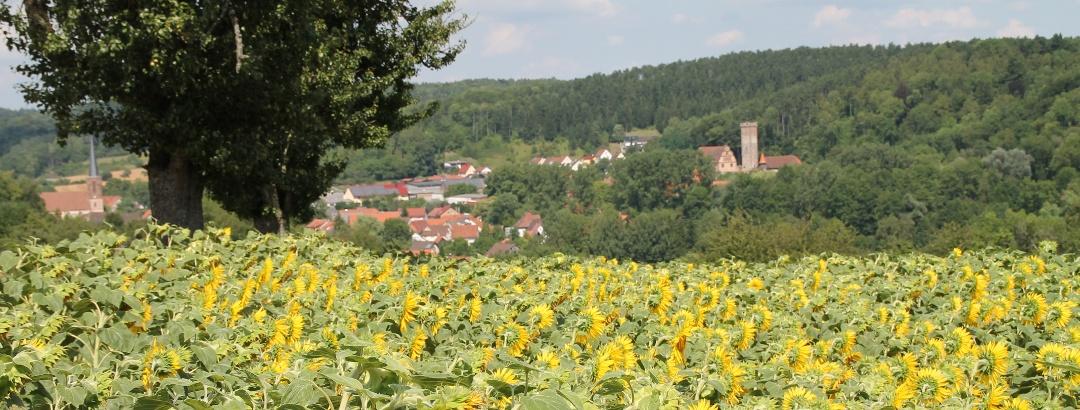 Odenwald Buchen-Bödigheim