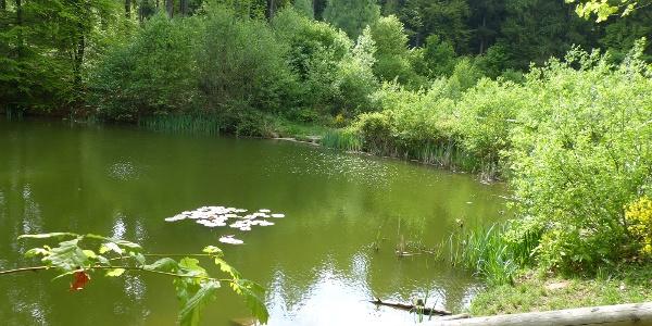 Reihersee bei Neunkirchen