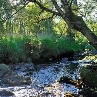La forêt des ducs Ternell
