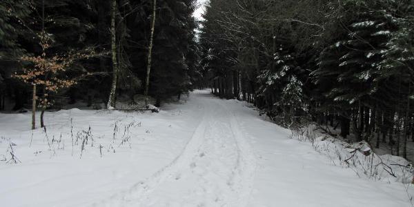 Kurz vor dem Wegedreieck. Ein weiterer Weg zum Bach ins Tal.