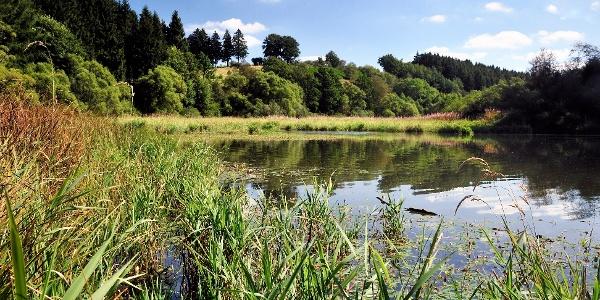 Een weerspiegelend meer Bütgenbach
