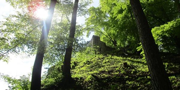 Burgruine Hohenfels auf dem geologischen Lehrpfad