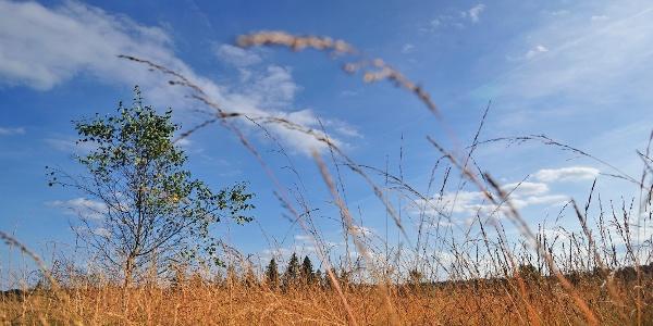 Landschaft im Wind Sourbrodt
