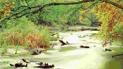 Im Warnow-Durchbruchstal kommt Dschungel-Feeling auf