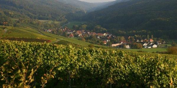 Weinort Geddelsbach im Brettachtal