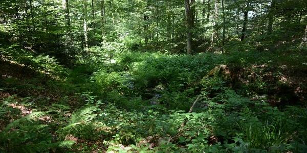 Trekking-Camp Erdbeerloch