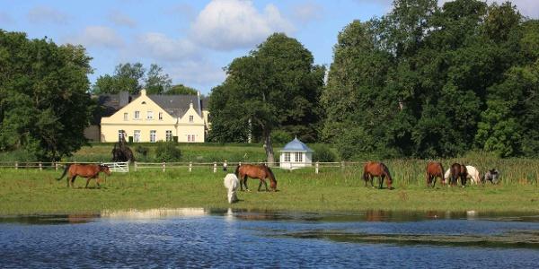 Pferde grasen vor dem Feriengut Dalwitz