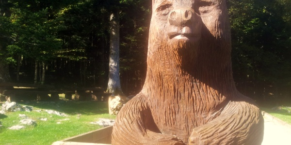 Mašuns bear