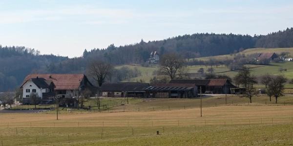 Blick vom Bühlarzer Hof (D) über den Hof Unterwald (CH) zum Waldheim (D)
