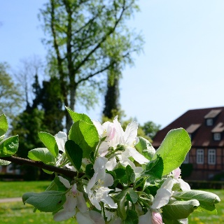 Klosterpark Harsefeld - Garten Europas