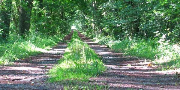 Pilgerweg durch das Moor bei Gyhum