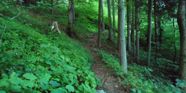 Fußweg am Zigöllerkogel