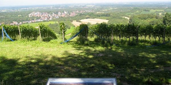 Blick von der Maiglöckchenhütte in die Rheinebene