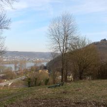 Ort & Burg Rheineck