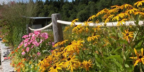 Es blüht am Natur Erlebnis Weg Bischofswiesen
