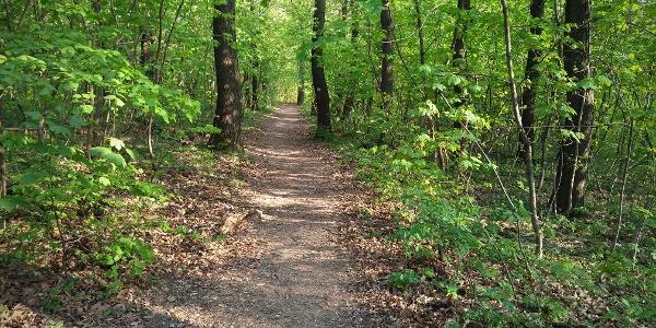 Parkerdő, de igazi erdő