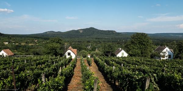 Vineyard slopes of Zalaszántó