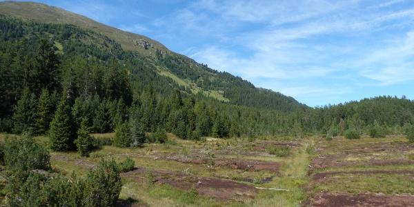 Blick Richtung Westen im Piller Moor