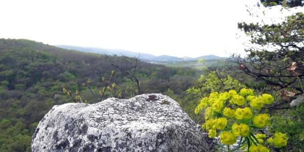 Kilátás a Kecske-hegy szikláiról