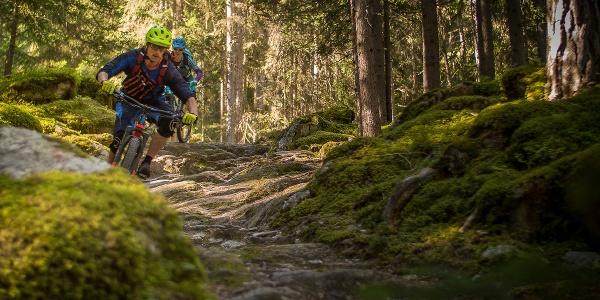 Zwei Mountainbiker in einem Wald beim Piz Umbrail