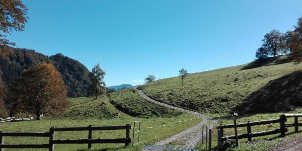 Die Wiesen neben Malga (Alm) Grassi