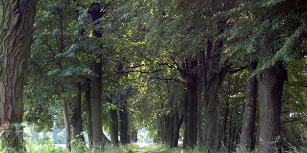 Waldweg im Heide- und Teichland