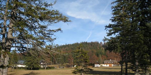 Auf der Mamauwiese mit Blick zum Gashof (20.11.2011)