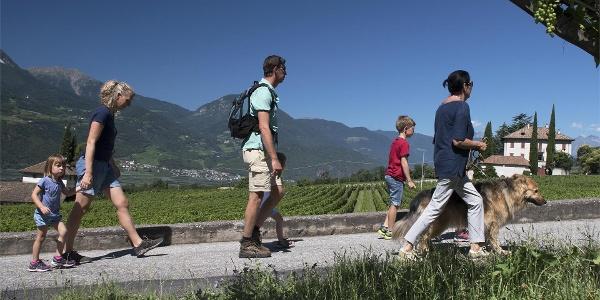 Wandern am Weinweg
