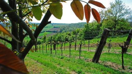 Weingärten beim Hegerkreuz