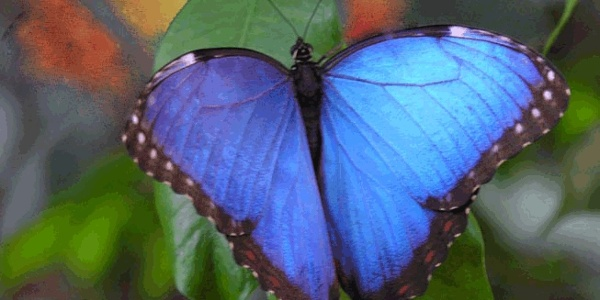 Schmetterlingspark in Uslar