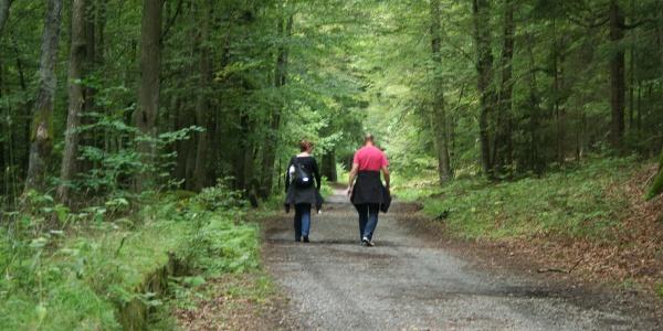 Ein bequemer Weg durch das Elendstal nach Schierke