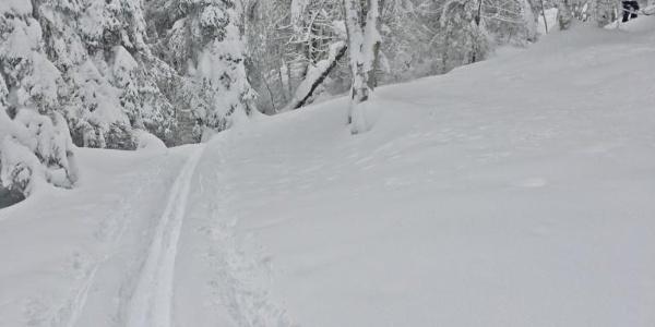 Waldskitour aufs Rossfeld