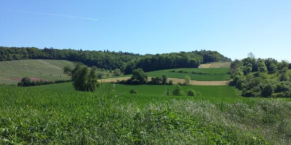 Landschaft bei Elsenz