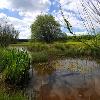Schopflocher Moor