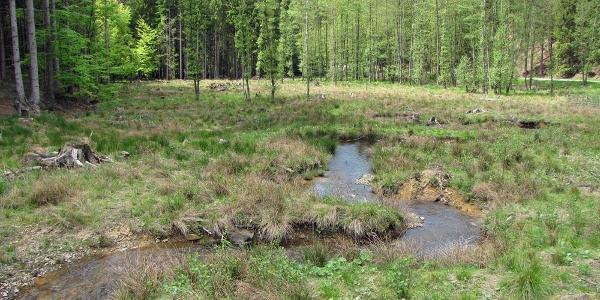 Die Große Schmalenau führt immer Wasser.