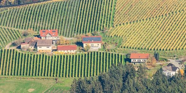 Weingut Pauritsch