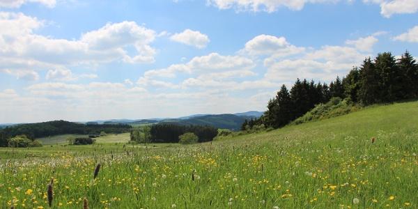 Traumhafte Fernblicke beim Wandern auf dem Medebacher Bergweg