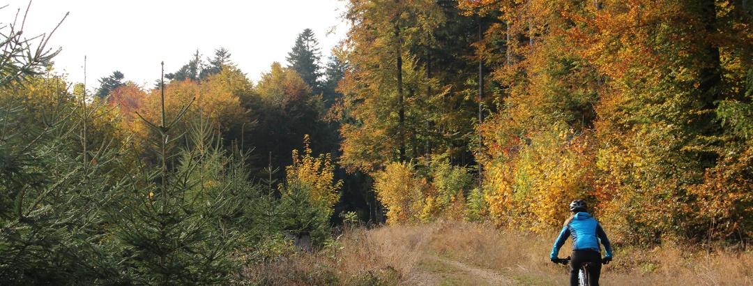 Unterwegs im Wald bei Gipf-Oberfrick