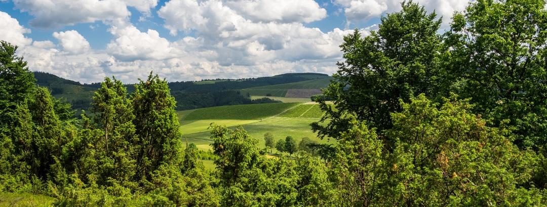 Wachholderheide im Naturschutzgebiet Rehhecke